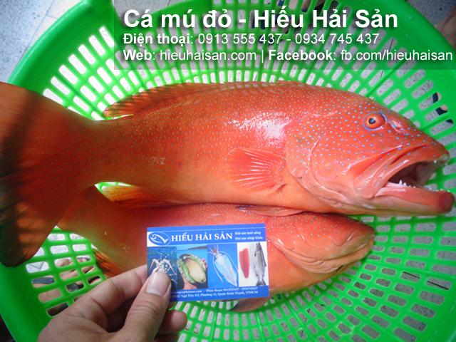 Cá mú đỏ